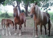 chevaux-de-traie-ballade-vae-espace-sport-et-nature-du-fier-a-motz